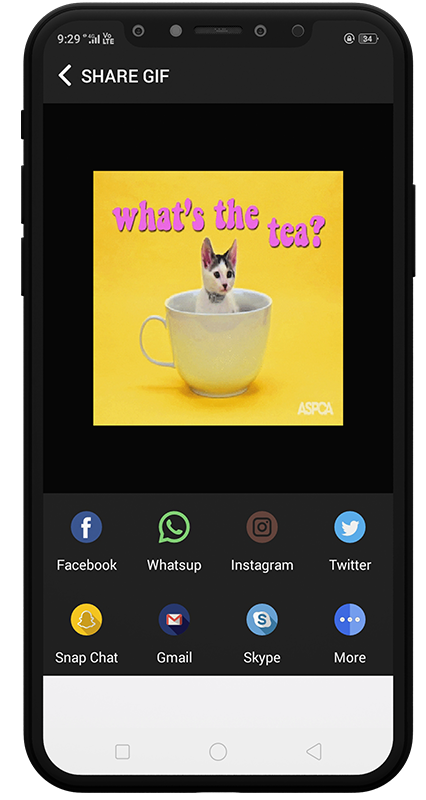 Gif-fy - Share